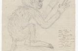 alexander-von-humboldt-cacajao-simia-melanocephala-o-o-1800-staatsbibliothek-zu-berlin-preusischer-kulturbesitz-nachl-alexander-von-humboldt-gr-kasten-6-nr-25-bl-1r_