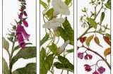 yanny-petters-in-the-hedgerow-foxglove-blind-weed-spindle-verre-eglomise-olivier-cornet-gallery